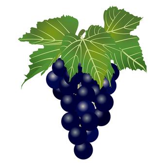 Delicious grape 2