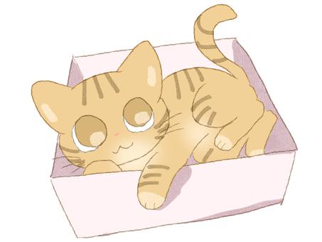 차 호랑이 고양이 박스