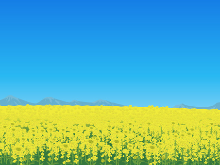 Rape flower's landscape 01