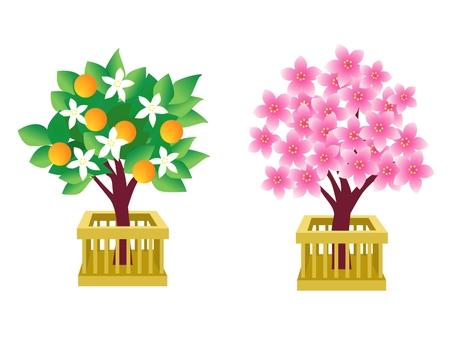 Peach and Tachibana Flower Doll Festival