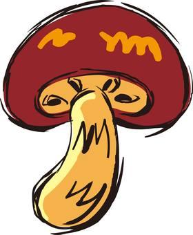 Shiitake mushroom, mushroom