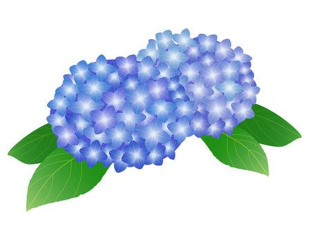 繡球花(藍色)切