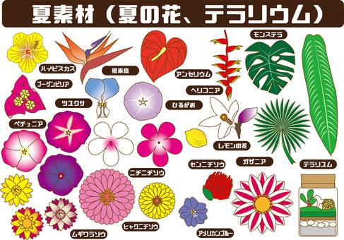 Summer materials (various flowers)