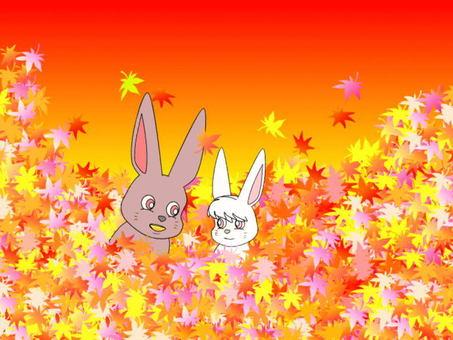 단풍 나무와 토끼