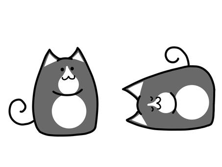 Deformed black and white cat