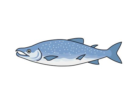 Salmon (Shake)