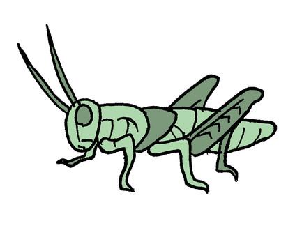 메뚜기 1