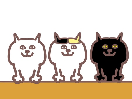 3 adult casual style cats