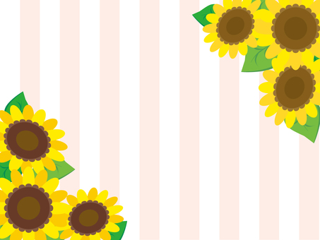 Sunflower and stripes (pink)