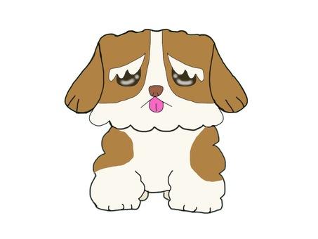 Dog Shih Tzu whole body