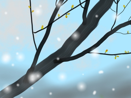 Buds and snow