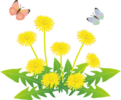 Dandelion flowers and butterflies