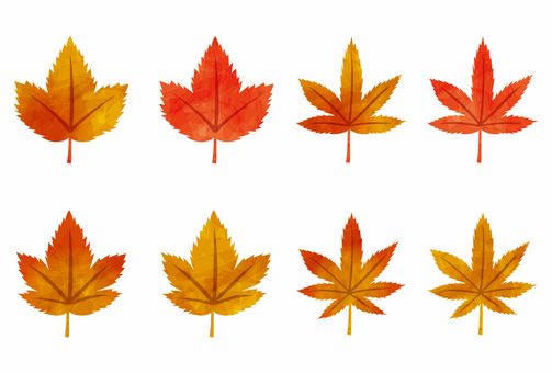 Maple leaves with maple