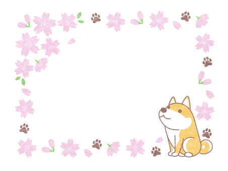 Sakura and Shiba Inu frame