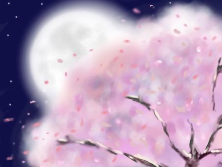 滿月照亮的櫻花