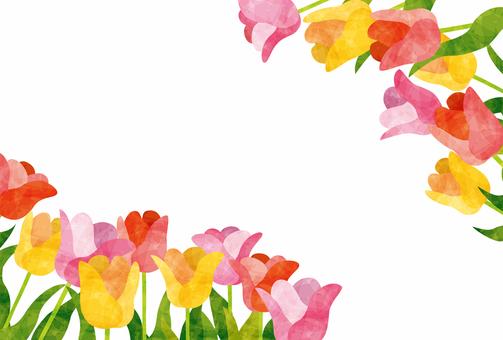 Frame / Tulip