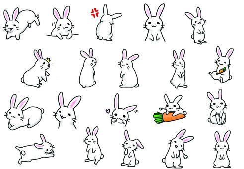 Assorted rabbit assortment 2