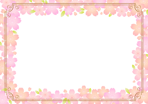 Cherry blossoms 312