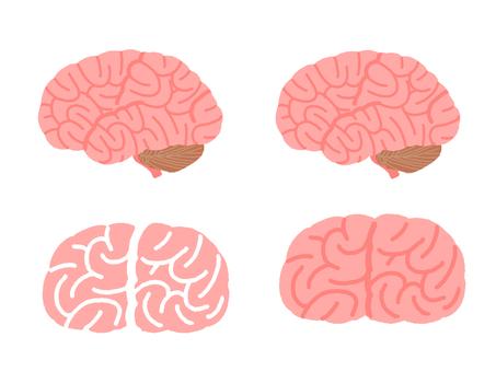 脳みそセット