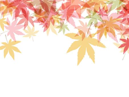 Autumn leaves 椛 Material 161016002
