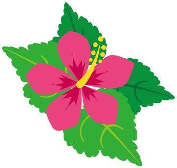 Flower - Hibiscus - 02