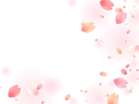 Sakura 171