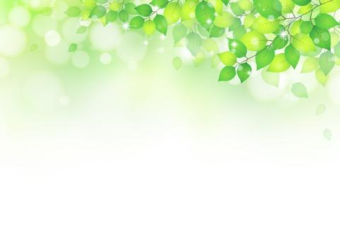 잎 316