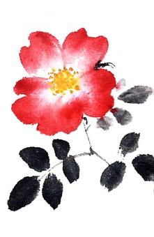 Rose (single)