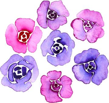 수채화 장미