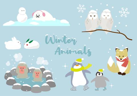 冬 動物 雪 かわいい