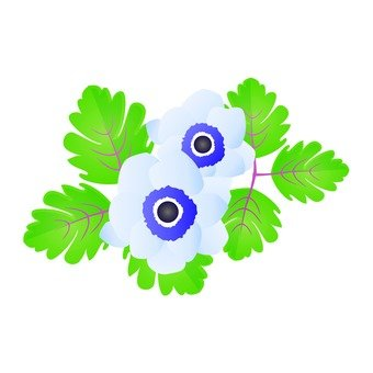 Light blue anemone