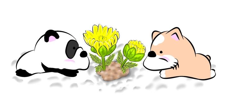복수초와 개, 팬더