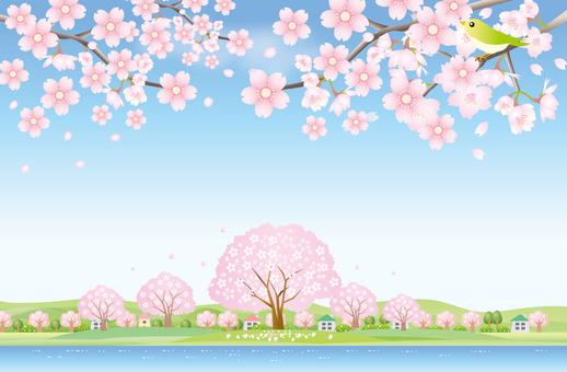 물가의 만개 한 벚꽃 풍경