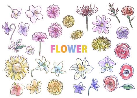 필기 꽃 일러스트 세트 (썬팅)