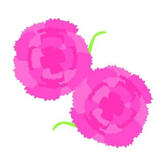 Pink carnation