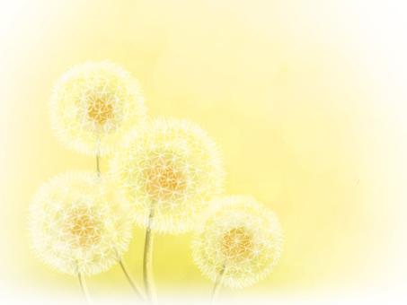 Dandelion dandelion