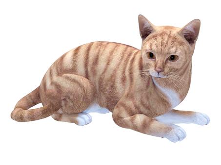 猫(RedTabby)