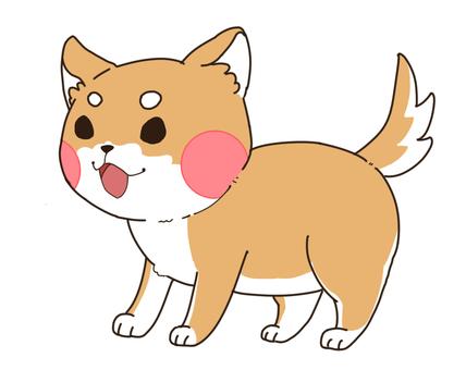 Shiba Inu 3