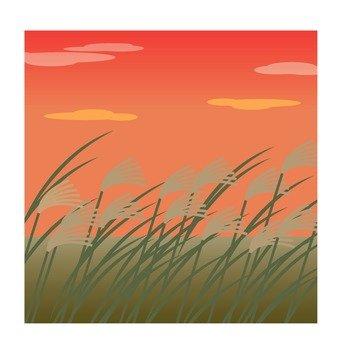 黃昏和芒草