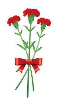 Carnation illustration