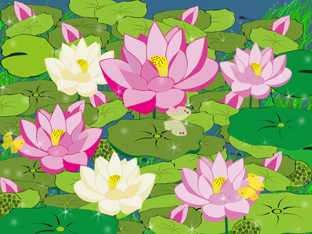 Lotus flower and pond