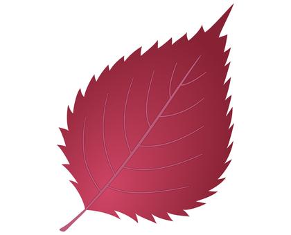 Shiso leaves_red shiso
