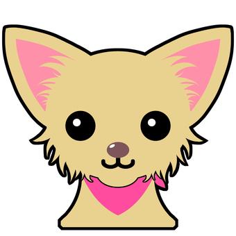 Long coat Chihuahua (Phone)