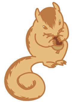 Squirrel 01