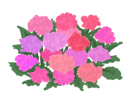 Hydrangea with hand-drawn pink