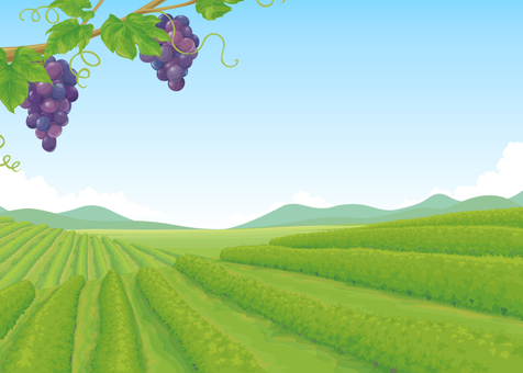 Vineyard background illustration