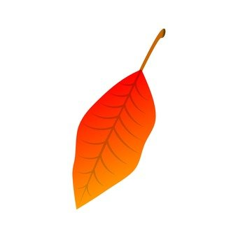 Oval deciduous leaves