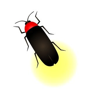 Summer fun poetry - Firefly
