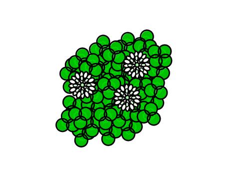 시로쯔메구사