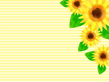 Sunflower 07